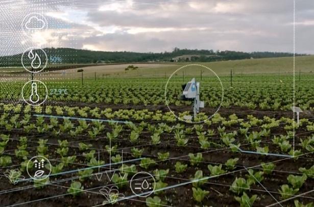 SustainableFarming_blog1_SN-694x458