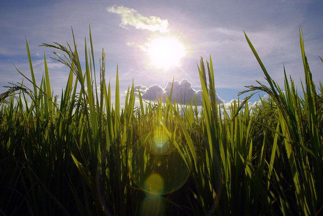 503-brazilian-rice-1319779-639x427.jpg