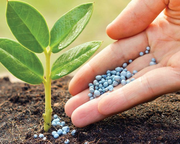 fertilizante615