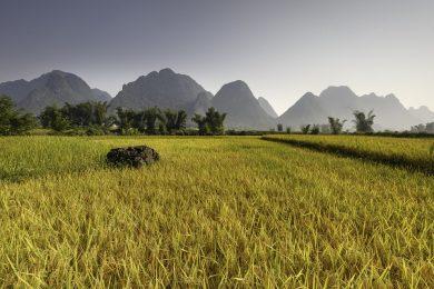 arroz-3-e1518718693234.jpg
