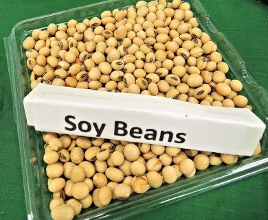 soy-beans-968986_640-1-e1525898313412.jpg