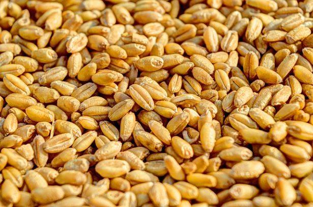 wheat-381848_640