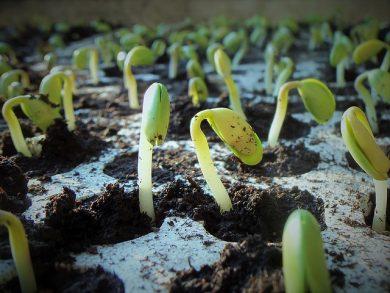 plants-1331667_640-e1528393071490.jpg