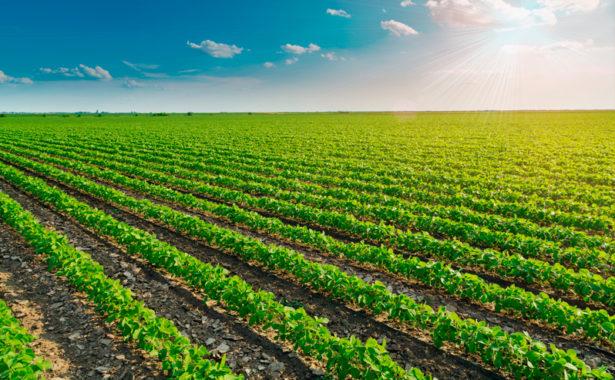 Resultado de imagem para plantio de soja