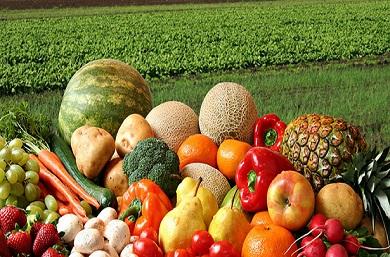 agricultura-organica390x257.jpg