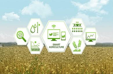 Agricultura-4-390x257.jpg