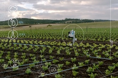 SustainableFarming_blog1_SN-390x257.jpg
