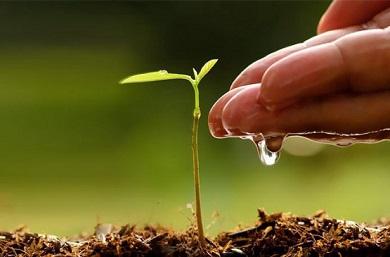 agua-fertilizante-390x257.jpg