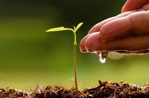 agua-fertilizante-615x406