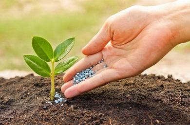 nanotecnologia-e-uso-de-fertilizantes-portal-agropecuario-390x257.jpg