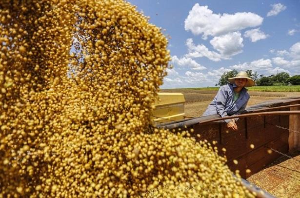 Brasil-controla-mais-de-50-da-exportacao-mundial-de-soja-615x406