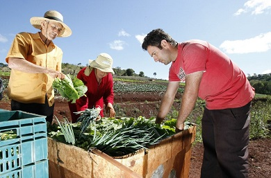 agricultura-390x257.jpg