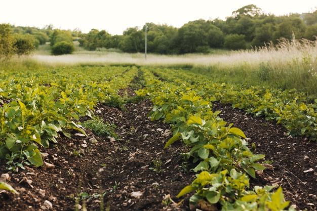 campo-agricola-longo_23-2148224052
