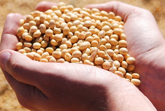 soybean-1831703_1920 (1)